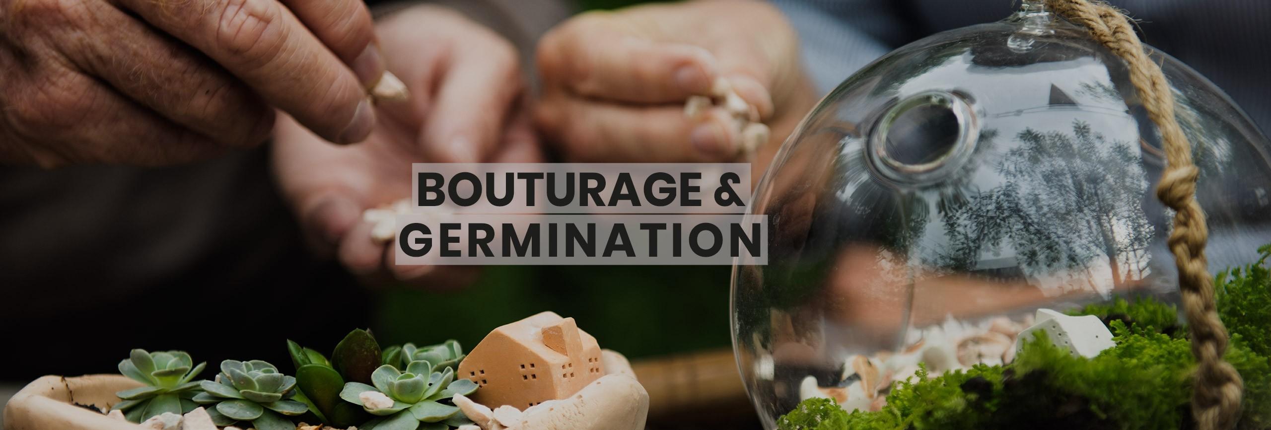 Bouturage et Germination